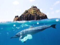 punga de plastic in mare